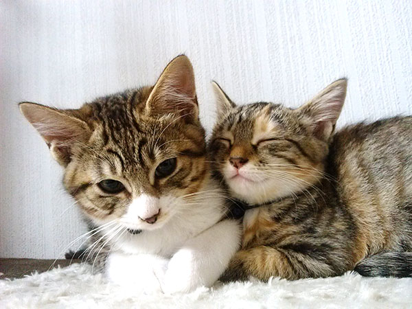 猫の好みと使い勝手のバランスで選ぼう