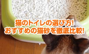 猫のトイレの選び方!おすすめの猫砂を徹底比較!