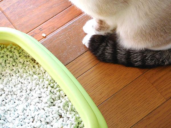 猫砂の種類と特徴