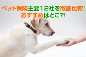 ペット保険主要12社を徹底比較!おすすめはどこ?犬や猫以外の動物を飼ってる人も要チェック